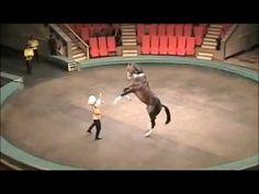 Akhal-Teke Horse Walks on Its Hind Legs - YouTube