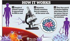 Cancer 'revolution': Immune system could kill EVERY diseased cell