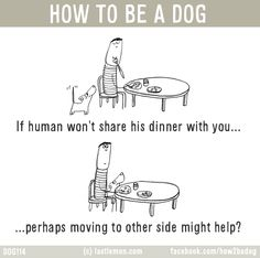 HOW TO BE A DOG: If human won't share his dinner with you...perhaps moving to other side might help?