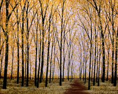 Hey, I found this really awesome Etsy listing at https://www.etsy.com/listing/84311519/amy-giacomelli-painting-prints-8-x-10