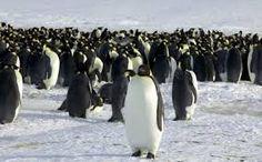 Afbeeldingsresultaat voor bewegende pinguin