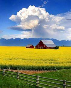 Barn in rich field.