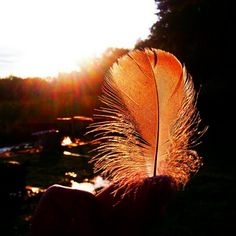 The light shines in the darkness, and the darkness has not over come it. John 1:5  #feather #lakehouse #lake #sunset #darkness #biblequote bibleversememes.com