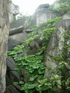 Estructura en piedra y naturaleza. El capricho de la naturaleza y el salvaje forraje que lo envuelve.