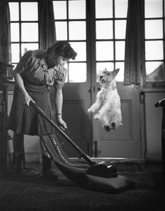 Funny Vintage Photography | small collection of funny vintage photos of dogs