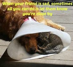 When your friend is sad, sometimes all you can do, is let them know you're close by :-)