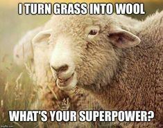 Knitting Quotes, Knitting Humor, Crochet Humor, Animals And Pets, Funny Animals, Cute Animals, Happy Animals, Farm Animals, Ewe Sheep