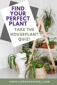 Not sure which type of houseplant to get? Take this houseplant quiz to find your PERFECT match! Answer these easy questions to find the right plant for you! House Plant Care, House Plants, Potted Plants, Indoor Plants, Growing Vegetables Indoors, Types Of Houseplants, Easy Plants To Grow, Low Light Plants, Mosquito Repelling Plants