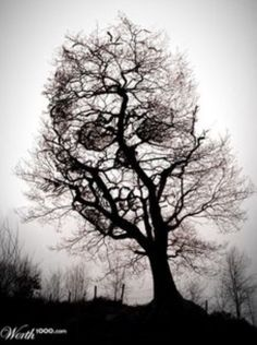 Take a look at this amazing Skull in Tree Scary Optical Illusion illusion. Browse and enjoy our huge collection of optical illusions and mind bending images and videos.
