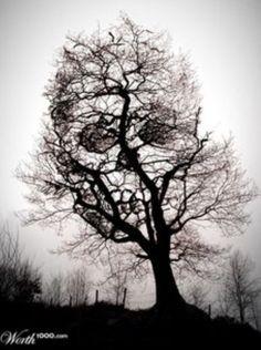 Hidden skull inside a tree.