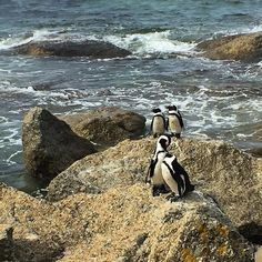 Bucket list: Spend a day getting to know the locals at a penguin sanctuary in South Africa. #TLPicks courtesy of TL Vice President Digital GM @thepamrusso by travelandleisure