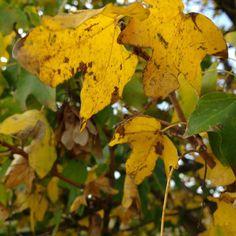 Meravigliarsi per delle foglie. La bellezza. #giallo