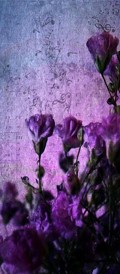colores purpura y violeta