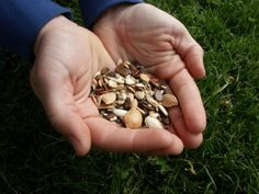 How To: SAVE YOUR SEEDS   Homesteading & Off-Grid