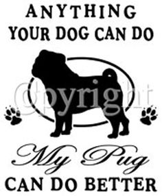 bất cứ điều gì con chó của bạn có thể làm pug của tôi có thể làm tốt hơn