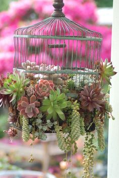 birdcage overflowing with succulents
