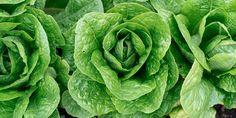 Πώς χρησιμοποιούμε τη μαγειρική σόδα στα φυτά του κήπου μας   Τα Μυστικά του Κήπου