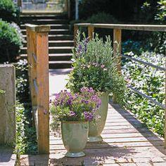 Balkon und Terrasse: Sommerbepflanzung im maritimen Look