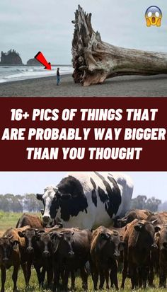 Size isn't necessarily an accomplishment in itself, but there's still something primal and awe-inducing about things that dwarf us and make us feel small. Swag Shoes, Bojack Horseman, 1st Anniversary Gifts, Suit Fashion, Fashion Rings, Trendy Outfits, Swaggy Outfits, Spring Outfits, Photography Poses