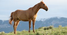 Brown Horse On Grass Field · Free Stock Photo