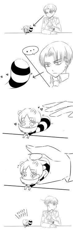 Levi and raccoon Eren // AoT