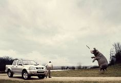 #well #trained #hippo #car #ad #win #habal #هبل #HabaLdotCom #هبل_دوت_كوم