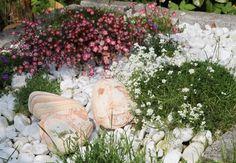 Tipps zum Anlegen eines Steingartens