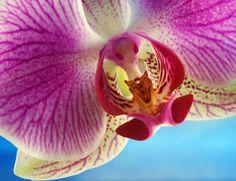 Eine blaue Orchidee richtig pflegen
