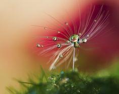 35 Beautiful Examples of Macro Photography - 121Clicks.