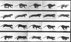 Lest I discriminate against the cat people out there, here's an analysis of motion of a running cat by Muybridge. Flicker away!