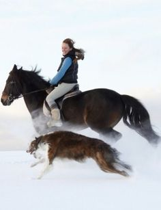 Borzoi and a horse: speed competition. #borzoi #dogs #Russian