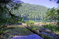Check out the most stunning natural attractions, including beaches, hot spring coves, and provincial parks, on Vancouver Island. Vancouver Island, Hot Springs, North America, Attraction, Cathedral, Canada, River, Mountains, Star