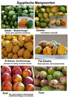 Ägyptische Rezepte: Mango - Mangosaft (Manga - Asir Manga)