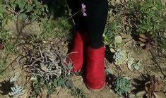 Red ankle boots Rage shoe and clothing store