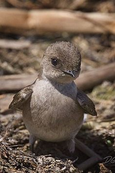I am 98% sure this is the baby penguin from the chipmunk adventure.