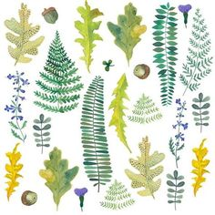 #ferns - #illustration #illustrationartists #watercolor #leaves #botanical #gouache #art #woodlands #ohkiistudio (at Williamsburg, Brooklyn)