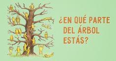 ¿En qué parte del árbol estás?