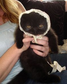 Do not do this to your cat-friend. And if you do, please send us the picture! sunvetanimalwellness.com