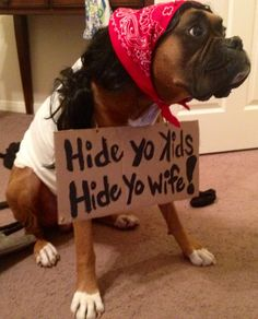 "My boxer's Halloween costume this year! The infamous: ""Antoine Dogson"" (easiest DIY costume ever) Hide Yo Kids, Hide Yo Wife!"