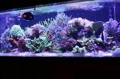 Tylor Armstrong's (tylorarm) Reef Aquarium