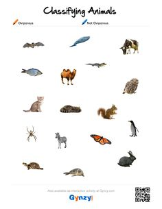 Teaching with help of the interactive whiteboard in a simple and effective way Classifying Animals, Keys, Pdf, Activities, Movie Posters, Vertebrates And Invertebrates, Animal Classification, Film Poster, Unique Key