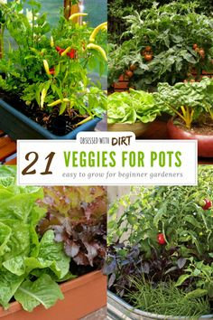 Indoor Vegetable Gardening 21 Best Container Gardening Vegetables and Pot Friendly Fruits - If you want to find the best container gardening vegetables to grow in your new garden, then check out our list of the top 21 vegetables for pots and tubs. Indoor Vegetable Gardening, Home Vegetable Garden, Hydroponic Gardening, Fruit Garden, Organic Gardening, Potted Garden, Urban Gardening, Garden Soil, Gardening In An Apartment