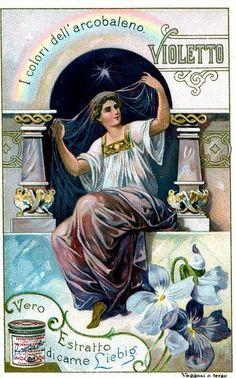 Liebig -S662- (Italia, 1901) _Colours of the Rainbow, Violetto
