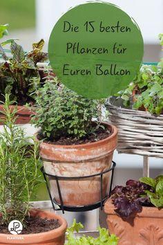 Plants for the balcony: Our Top 15 – Plantura - Balkon Ideen 2020 Growing Vegetables In Pots, Home Grown Vegetables, Growing Plants, Indoor Garden, Indoor Plants, Balcony Plants, Good Environment, Organic Fertilizer, Potting Soil