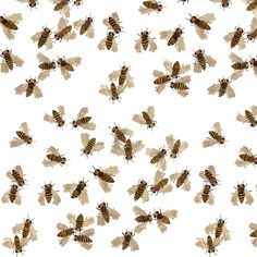 Honeybees - Woodland Collection fabric by gollybard on Spoonflower - custom fabric
