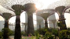 Singapore-garden-by-the-bay-trees! Biophilic cities are places where animals and plants and other wild things weave through our everyday lives.