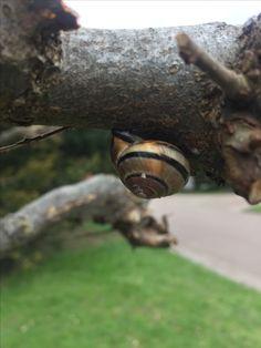 Snail breaktime !! In DK