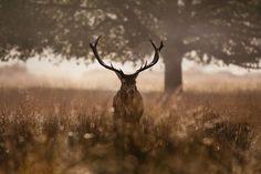 deer19