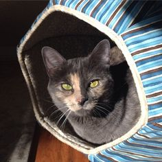 Spike the Wonder Cat loves her Cat Ball® cat bed! Thanks to our customer for sharing these photos of Spike. She's a fun kitty!