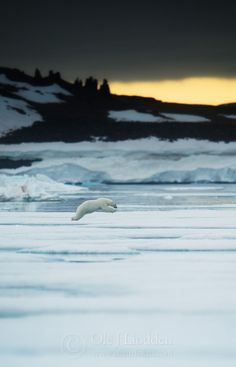 Svalbard 2013 ...........click here to find out more http://googydog.com